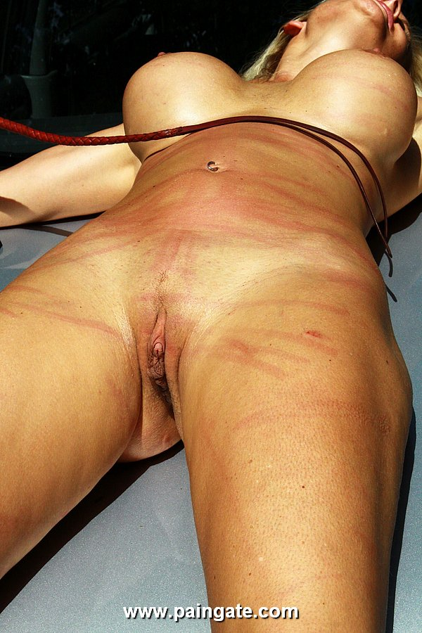 Bull whipped HQ porn search